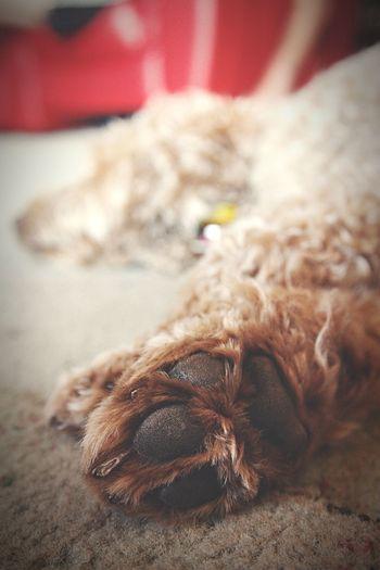 CLOSE-UP OF DOG SLEEPING ON FLOOR