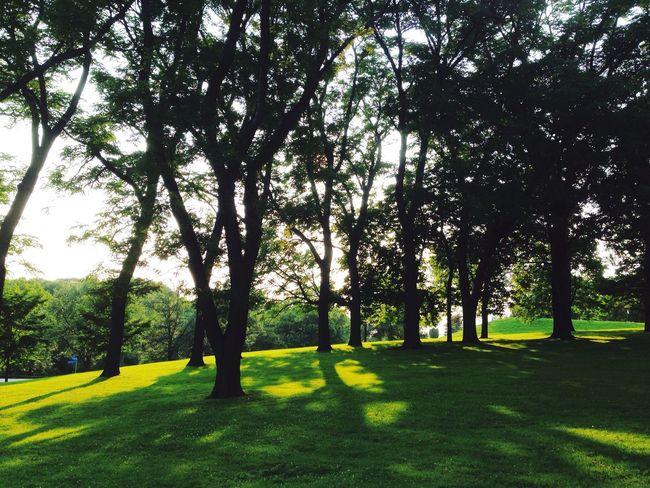 Open Edit Trees Park Serene Outdoors