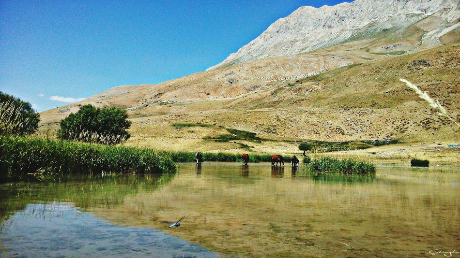 Munzurnationalpark Dersim Turkey Ovacık Water Horses Munzurmountain Lake