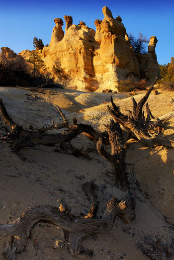Tree trunks on sand by rocky structure against clear sky