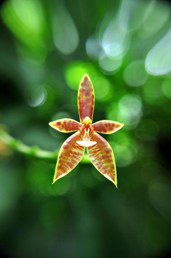Close-up of orange flower against blurred background