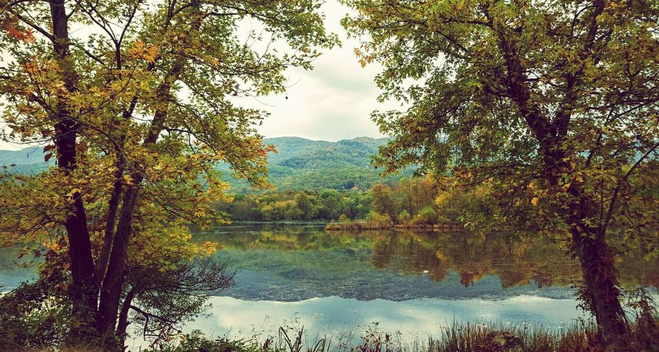 First Eyeem Photo Fall Colors Fall Beauty Mountain Water Reflections Water Reflection Lake Beautiful Nature Autumn Leaves Trees Trees And Sky Fall Lakes  Lakeside Fall Season Water Reflections Lakeview Cove Lake Caryville Caryville, Tn