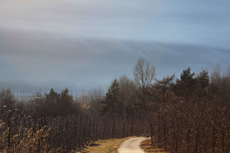 Beauty In Nature December 2015 Fog Landscape No Snow  Non-urban Scene Outdoors Pathway Rabland,sudtirol Sunny Day Trees Wintertime