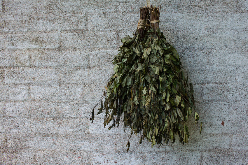 Bath Broom Broom Close-up Day Green Color Growth Nature No People Outdoors Plant Stone Wall