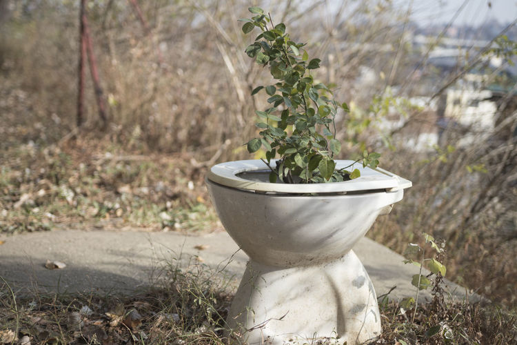 Plant Growth Nature No People Day Green Color Beauty In Nature Focus On Foreground Outdoors Plant Part Leaf Close-up Potted Plant Land Selective Focus Field Sunlight Tree Container Botany The Toilet Toalet Ceramics