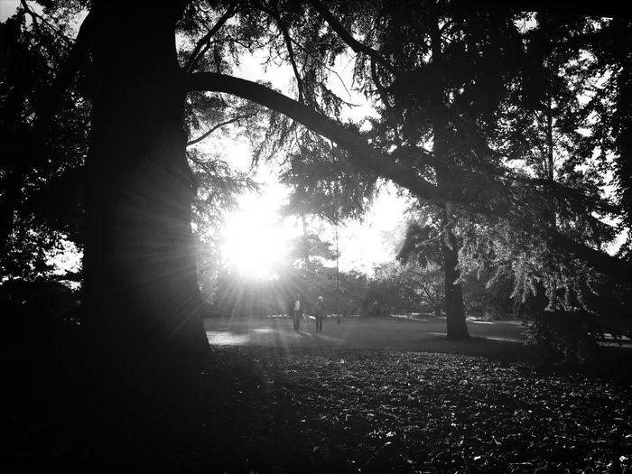 Sunset Light Trees Scenery