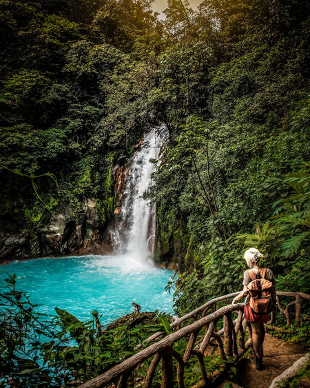 Tree Waterfall Forest Scenics - Nature Beauty In Nature Motion Nature Plant Water Land Long Exposure Flowing Water Environment Outdoors Travel Rainforest Power In Nature Flowing Tropical Rainforest Costa Rica Jungle Nature Photography Travel Destinations Travel Traveling
