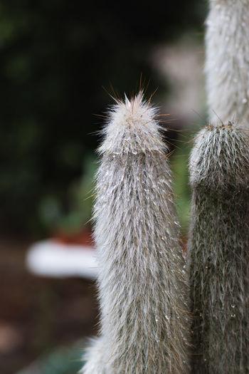Close-up of cactus outdoors