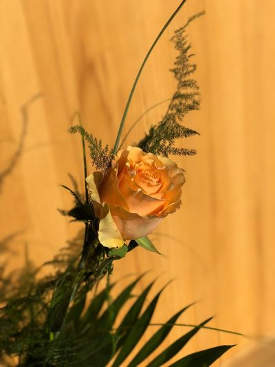Rose with wood