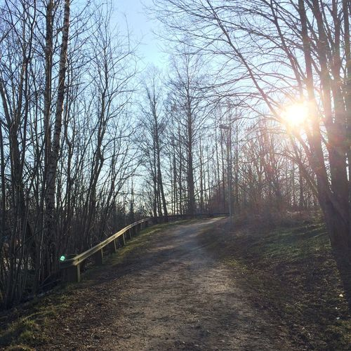 Footpath amidst trees in forest against bright sun