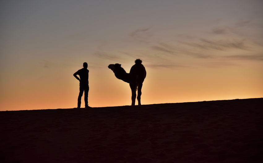 Beduine meets Camel off The Dune in Sunset Light . Silhouette Sunset Sky Two People Standing Orange Color Togetherness Men Leisure Activity Real People Land Lifestyles Nature Beauty In Nature Scenics - Nature Bonding People Friendship Adult Full Length Positive Emotion Couple - Relationship EyeEm Nature Lover EyeEm Selects Travel Travel Photography Adventure Nikon Nikonphotography Atmospheric Mood Gorgeous Animal Camel Desert Desert Beauty Outdoor Photography Outdoor Landscape_photography Holiday Moments