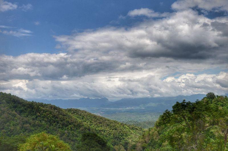 Tea Farm Raming MaeTang Chiangmai Thailand Tree Tea Crop Mountain Water Forest Agriculture Tree Area Blue Social Issues Sky