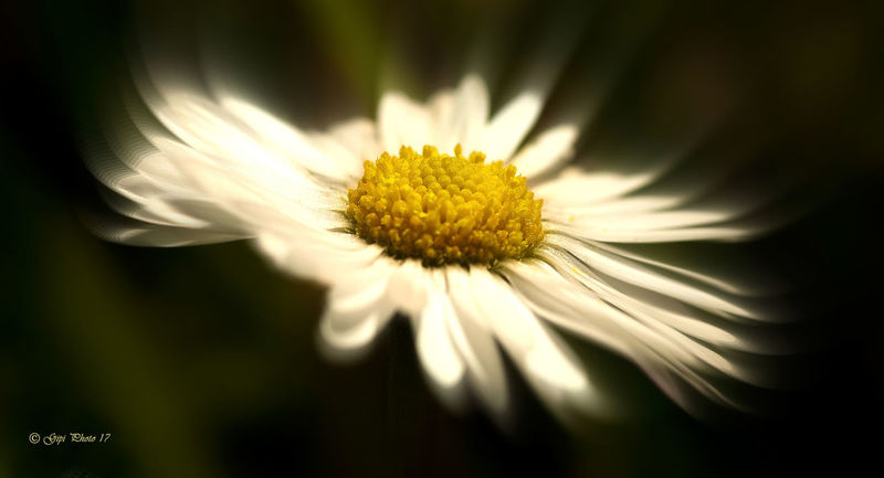 Flower Flower Petal Nature Close-up Macro Photography