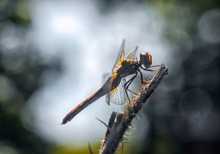 Beauty In Nature Close-up Dragonfly Insect Nature Selective Focus
