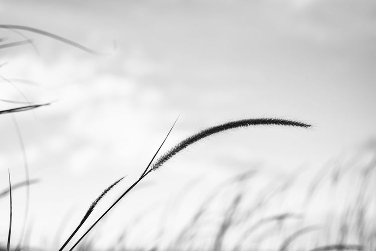 Be great' Bnw Bnw_collection Bnw_friday_eyeemchallenge Bnw_life Bnwphotography Bnw_worldwide Bnw_society Bnwmood Flying Nature Bird Cereal Plant Animal Wildlife No People Sky Growth Plant Day Close-up Outdoors Grass Beauty In Nature Visual Creativity Summer Exploratorium
