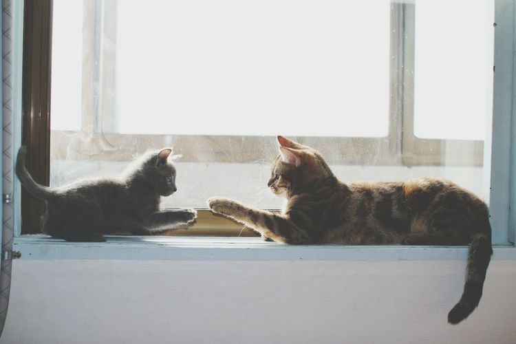 Cats Sitting Face To Face On Window Sill