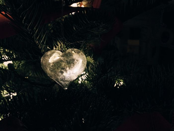 Close-up of christmas tree at home
