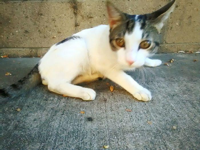 Kitty Gato