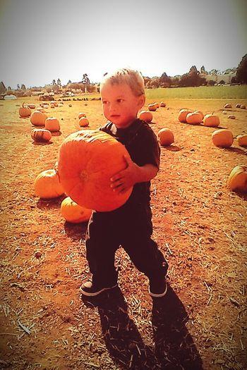 PumpkinPatch🎃 Happy Halloween Pumpkin Halloween EyeEm Halloween2015 Halloweenfun Halloween_Collection Pumpkinpatch