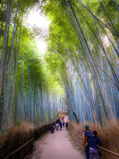 People walking on walkway in forest