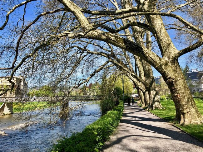 Spring coming Branch Day Nature Outdoors Plant River Shadow Sunlight Tree Tree Trunk Treelined Trunk Water