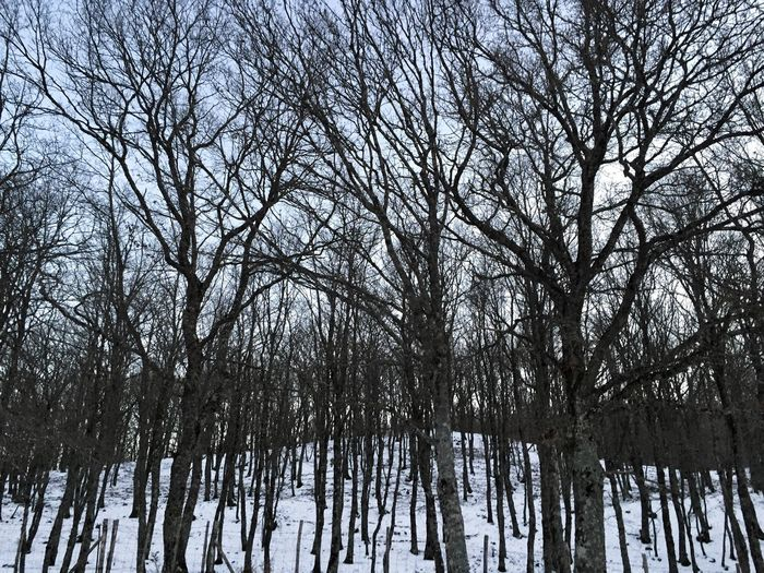 Cesarò-nebrodi Entroterra Siciliano Bare Tree Tree Winter Snow Cold Temperature Nature Tranquility Beauty In Nature Branch No People Outdoors Day Tranquil Scene Scenics Low Angle View Sky Wood WoodLand Nature Nature_collection Nature Photography Snow ❄ Snowing