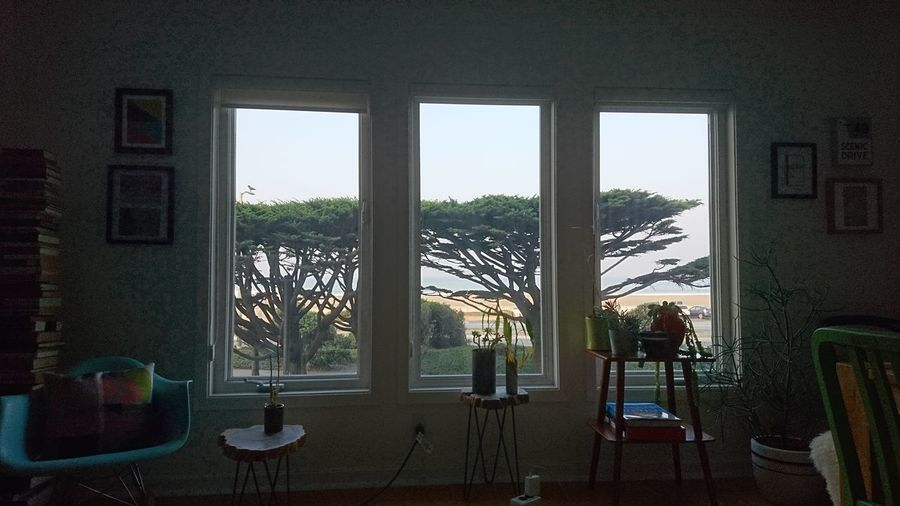 Looking outside. San Francisco SF California CA United States USA Windows Window Frame Trees Ocean Beach Ocean Beach San Francisco Interior Interior Design Interior Views Inside Out Window Sky Architecture