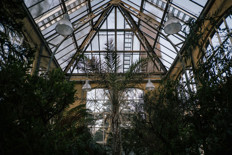 Hortus Botanicus Plant Indoors  Greenhouse Architecture Tree Growth Day Built Structure No People Low Angle View Ceiling Glass - Material Nature Transparent Botany Plant Nursery Agriculture Arch Metal