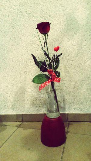 Valentine's Day  In Love ♡