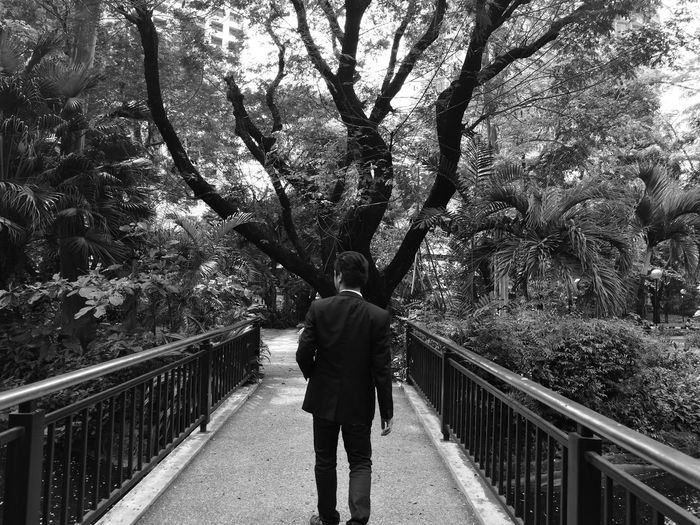 Rear view of businessman standing on footbridge amidst trees at park