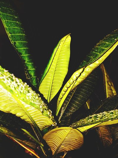 just around the house Leaf Water Close-up Plant Green Color