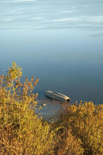 High angle view of plants floating on lake