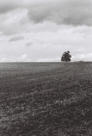 Countryside Agriculture Landscape Nature Sky Field Tranquility Rural Scene Beauty In Nature Plough Scenics Tree Outdoors No People Spooky Trees Trees Tree Beauty In Nature Tranquility England Countryside Spooky Atmosphere Spooky Sherwood Forest Contax167mt CarlZeiss