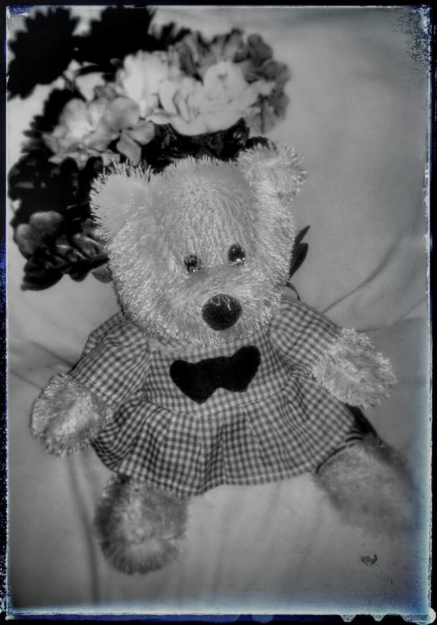 stuffed toy, toy, animal representation, no people, childhood, bear, teddy bear, close-up, indoors, stuffed, animal themes, day, mammal