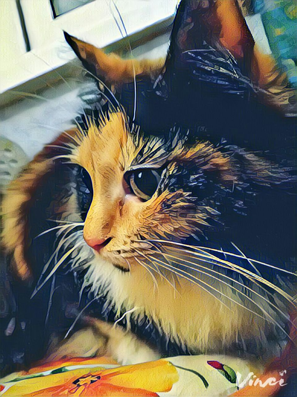 pets, domestic cat, domestic animals, animal themes, one animal, mammal, indoors, feline, sitting, no people, close-up, day