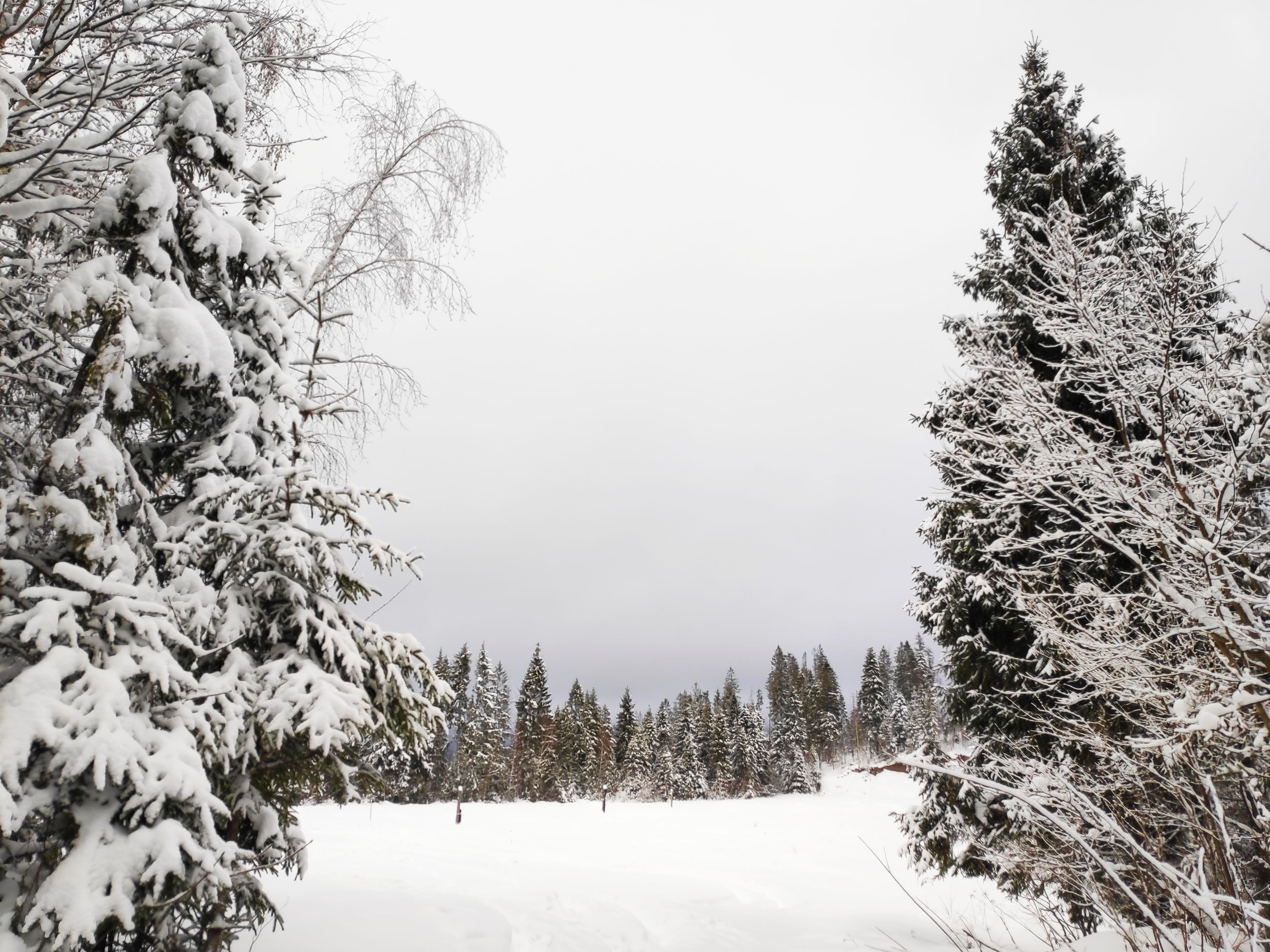 tree, cold temperature, winter, snow, plant, beauty in nature, tranquility, sky, nature, covering, scenics - nature, tranquil scene, no people, growth, day, frozen, land, non-urban scene, branch, outdoors, coniferous tree, snowcapped mountain, snowing