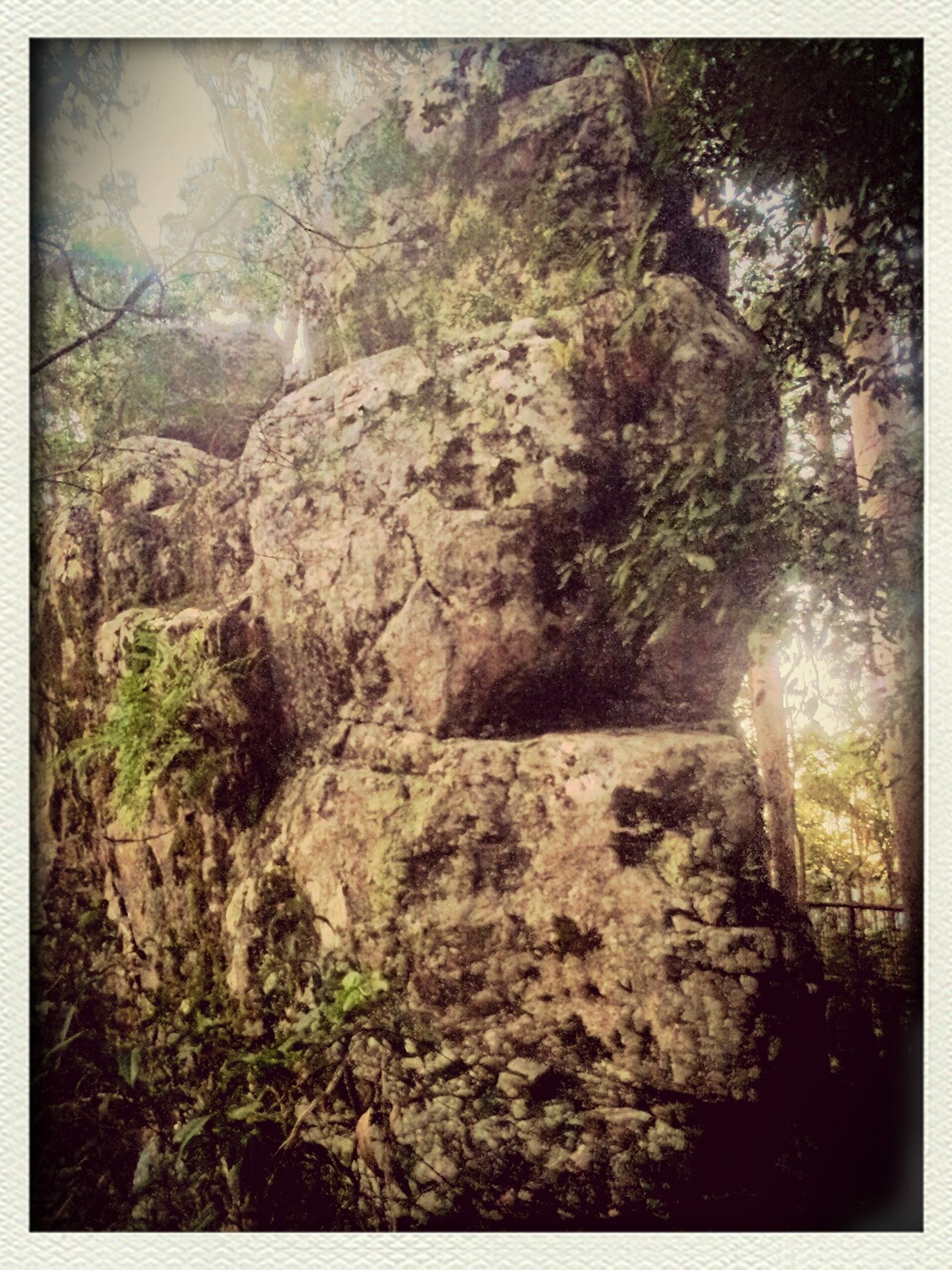 transfer print, auto post production filter, rock - object, tree, nature, rock formation, forest, growth, tranquility, rock, day, textured, beauty in nature, sunlight, outdoors, moss, plant, no people, rough, low angle view