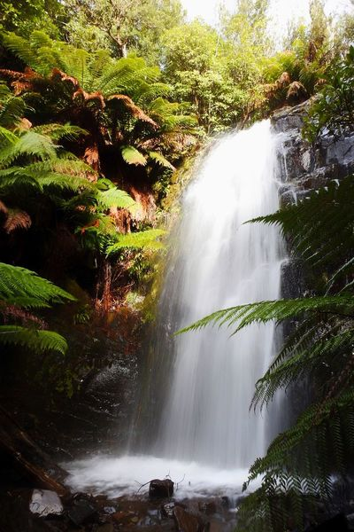 Waterfall Motion Water Long Exposure Beauty In Nature Flowing Water Scenics Nature Tourism River Tree Rock - Object Rapid Forest Travel Travel Destinations Outdoors No People Power In Nature Plant Tasmania