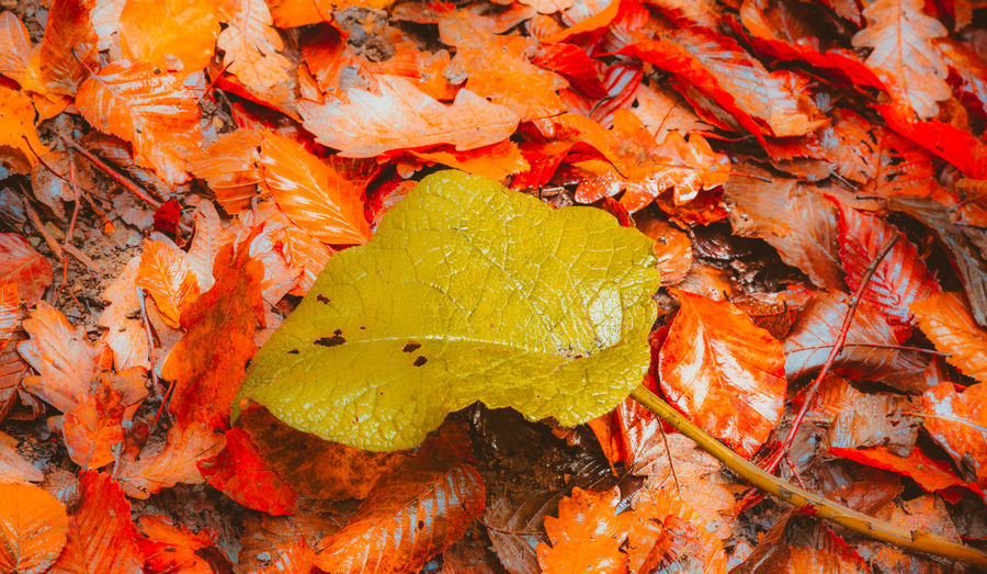 Autumn Background Blue Bright Close Closeup Color Colorful Drop Drops Fall Foliage Forest Fresh Golden Green Lake Leaf Leaves Maple Multi Natural Nature Orange Organic Outdoor Pastel Plant Pond Rain RainDrop Red Reflection Season  Soft Surface Texture Tree Wet Yedigoller Yellow