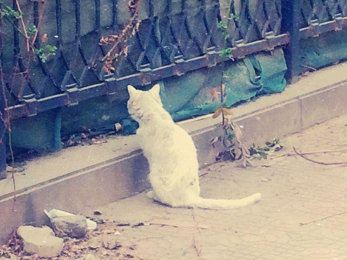 🐱🐱🐱 Domestic Cat Animal Themes Domestic Animals One Animal No People Feline