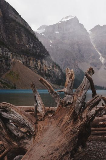 Driftwood on landscape with mountain range in the background