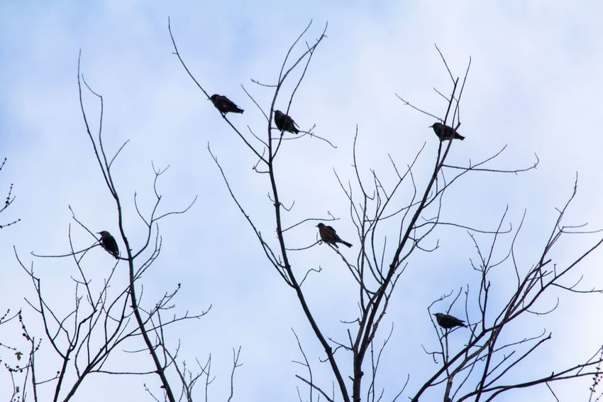 Canon EOS 60D Sky Animals In The Wild Low Angle View Bird Vertebrate No People Tree