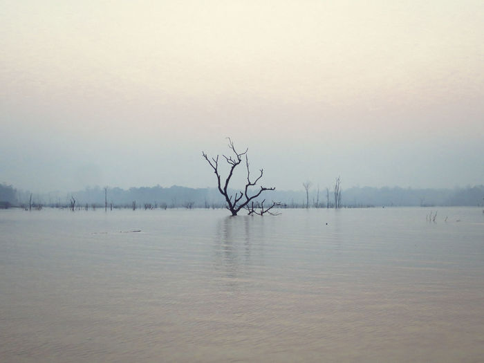 Beauty In Nature Bird Day Lake Laos Nature No People Outdoors Scenics Sky Tranquil Scene Tranquility Tree Water
