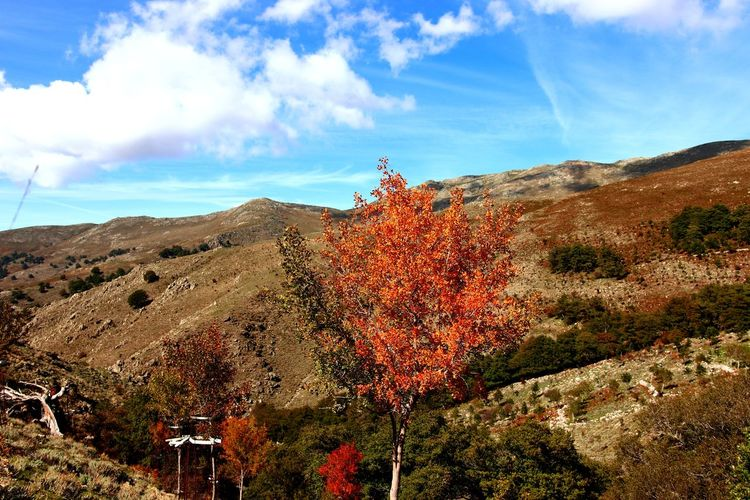 Plants growing on mountain against sky during autumn