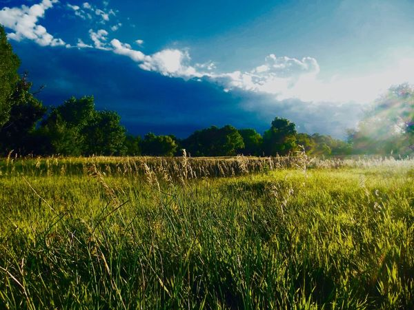 Vividly viewed EyeEmNewHere Field Landscape Nature Sky Growth Agriculture Tree Tranquility Beauty In Nature Tranquil Scene Grass Cloud - Sky No People Outdoors Scenics Rural Scene Day EyeEmNewHere