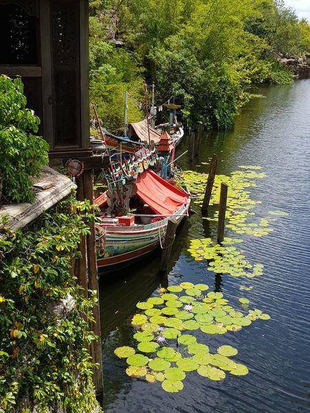 May,2018 - Animal Kingdom Travel Lovethisplace Animalkingdom Greenflowers Beautiful Day Sunnyday☀️ Nature Photography Boat