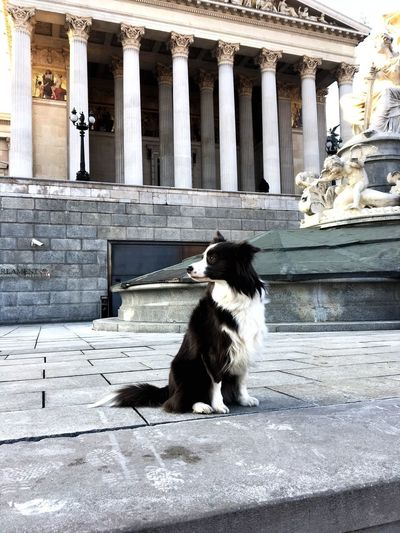 VIE Vienna Parlament Mammal Animal Themes Animal One Animal Built Structure Domestic Animals Pets Dog