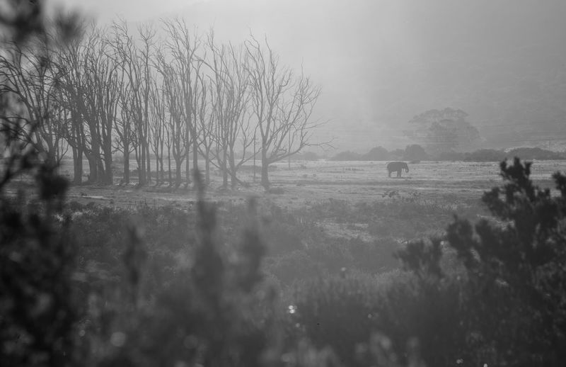Animal Beauty In Nature Day Environment Field Fog Land Landscape Nature No People Non-urban Scene Outdoors Plant Rural Scene Scenics - Nature Sky Tranquil Scene Tranquility Tree