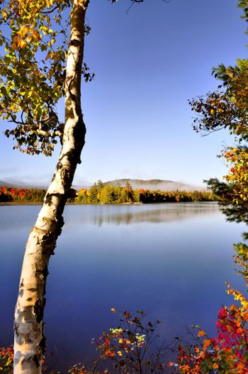 View of trees by calm lake