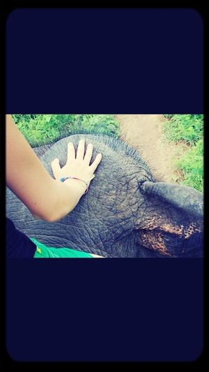 In Love Riding On An Elephant